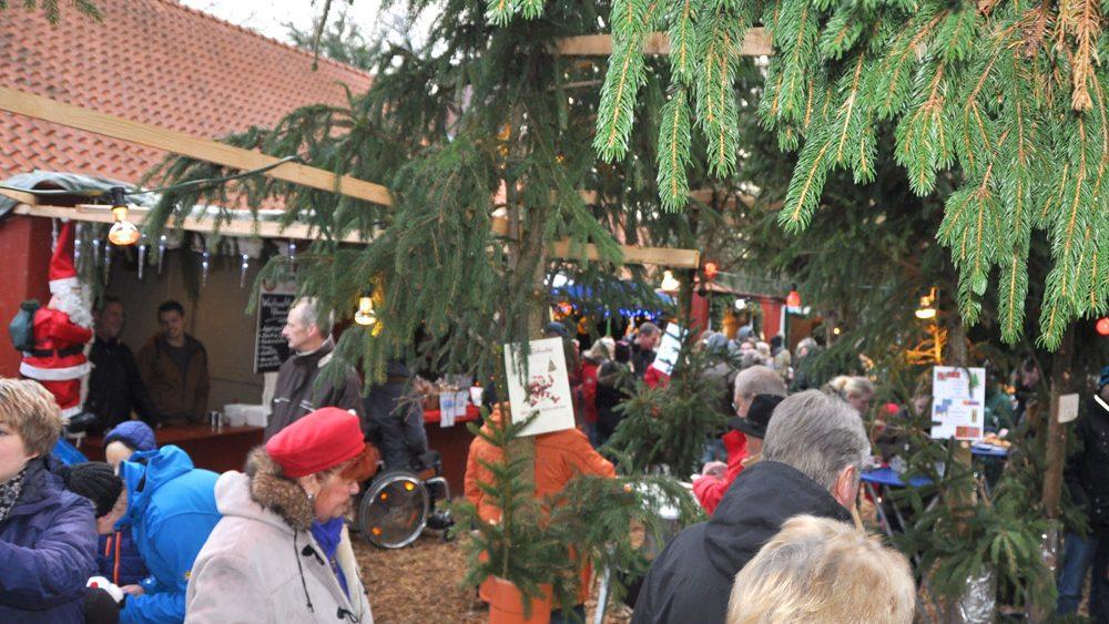 Weihnachtswald-Esens-Foto-Adalbert-Oldewurtel